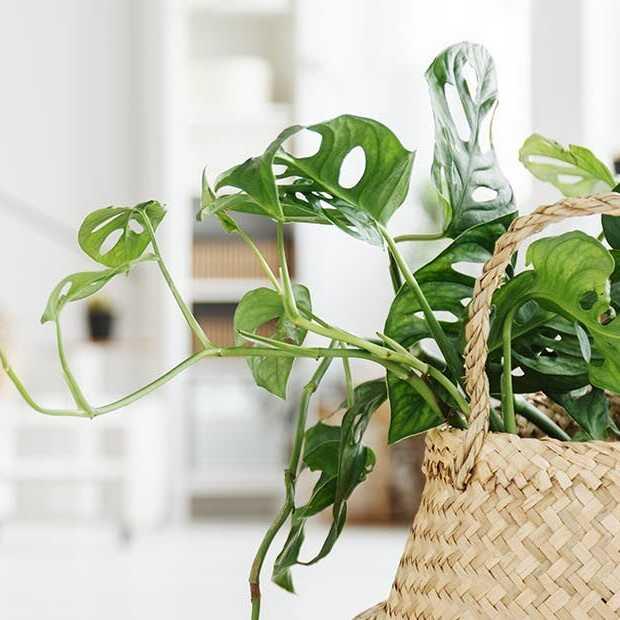 Instagram inspireert mensen tot planten kopen