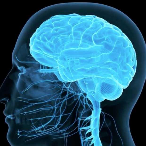 Wetenschappers dienen Meth   toe aan kunstmatig brein