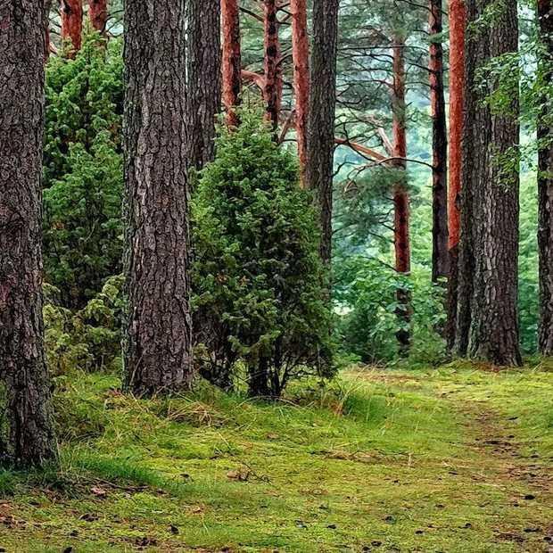 Hoeveel bomen heeft Ecosia geplant?
