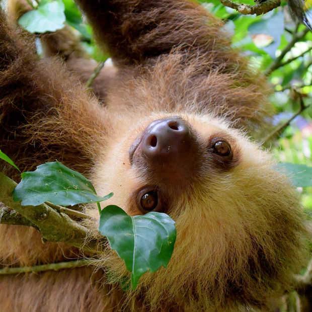 Goed Nieuws Vrijdag: overal frikandellen eten, zeldzame tijgers gespot en minder ontbossing in Costa Rica
