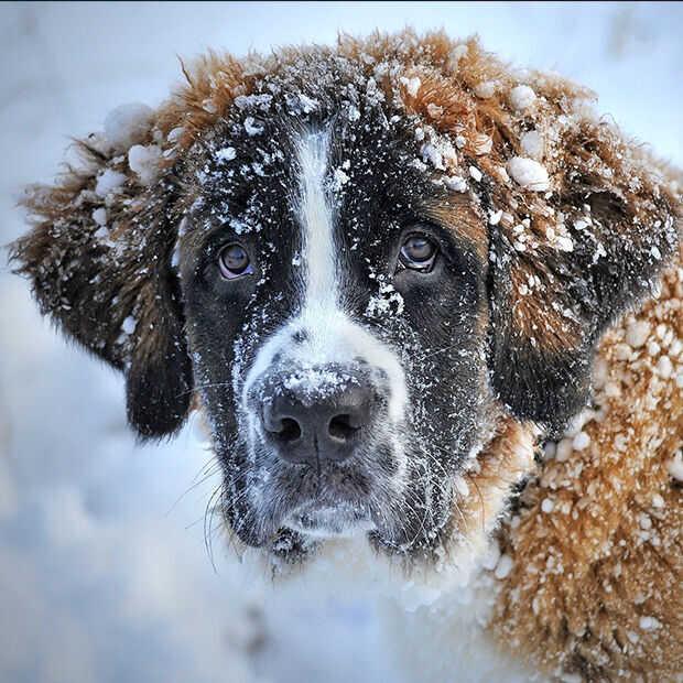Goed nieuws: sneeuw- en ijspret, podcast AIVD en muziek voor je brein