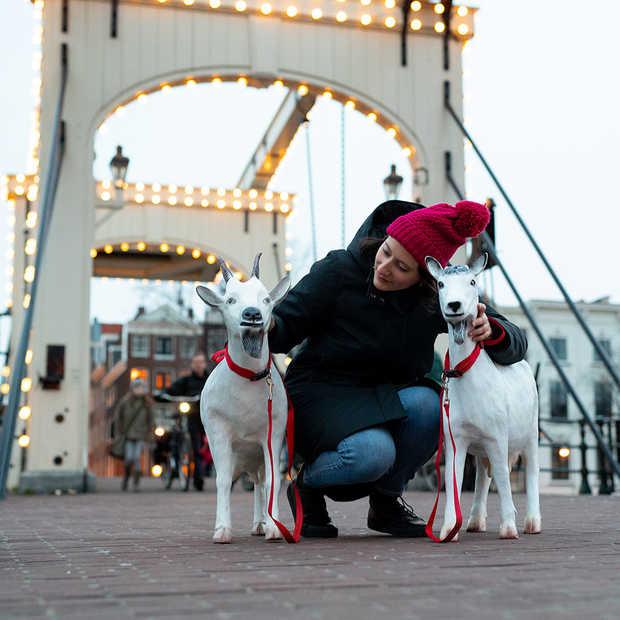 Geiten gespot in Amsterdam voor aankondiging van de serie Travel with a Goat