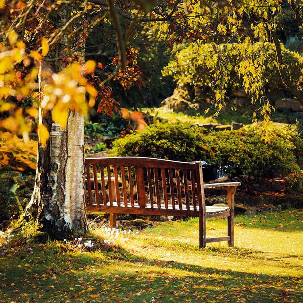 De herfst is het moment om je tuin aan te pakken