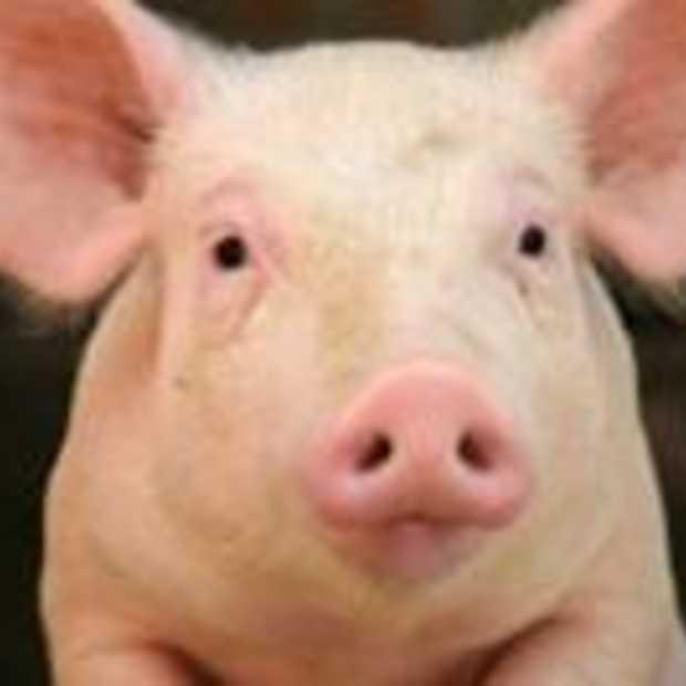 Twitter meldt varkensgriep in Rotterdam