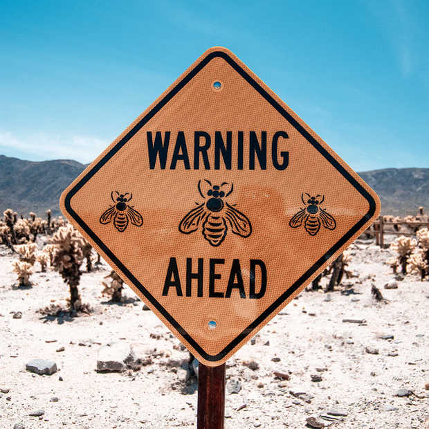 Wespenplaag in aantocht: Huis- tuin en keukenmiddeltjes om je te wapenen
