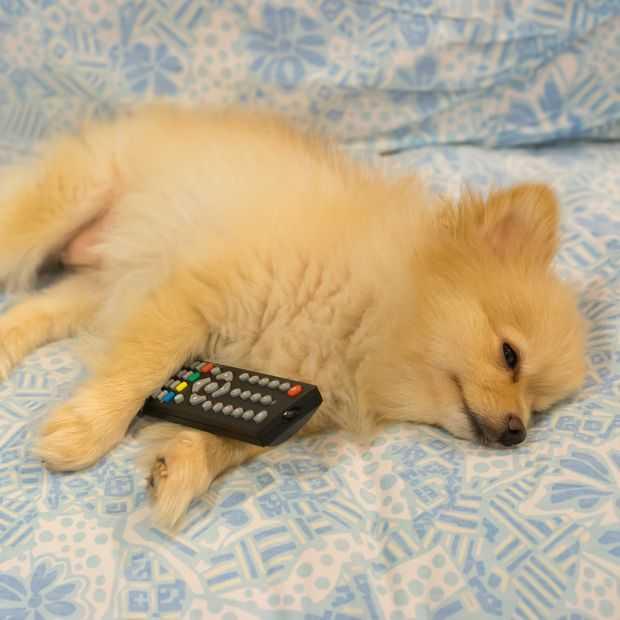 Video: wat ziet je hond eigenlijk als 'ie tv kijkt?