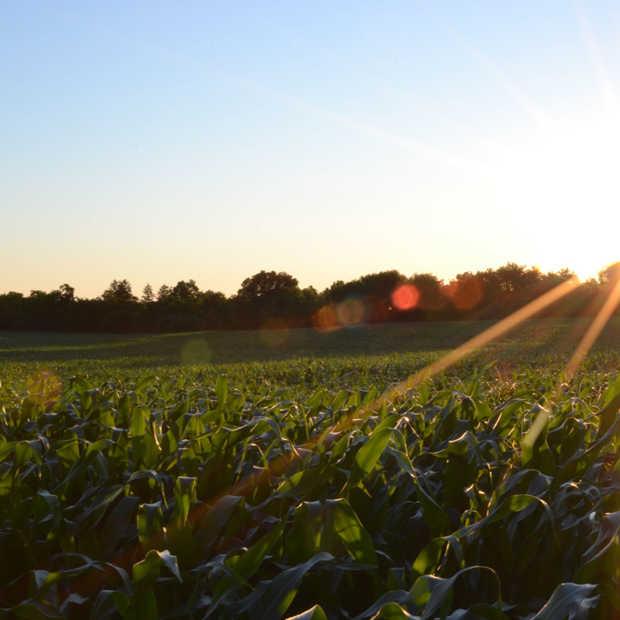 De zomer is aangebroken: zo geniet je veilig in de zon