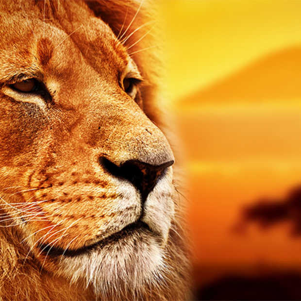 AI om wilde dieren in Tanzania te tellen