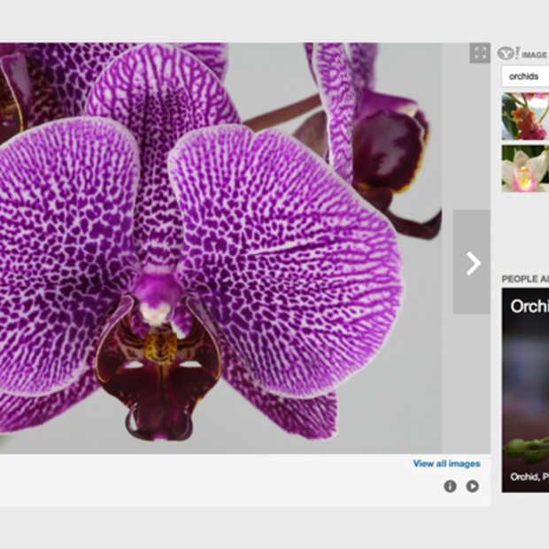 Yahoo toont nu ook foto's Flickr bij zoeken naar afbeeldingen