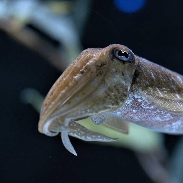 Waarom je jaloers moet zijn op een zeekat