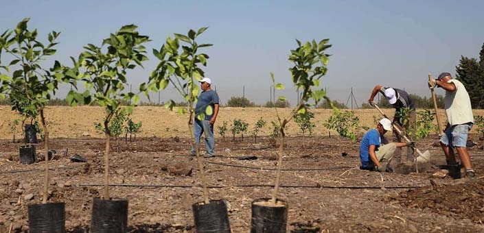Duurzaam ondernemen: plant een bos