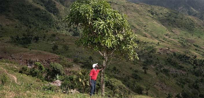 Koop een boom bij Treedom en maak de wereld een stukje beter